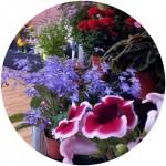 Musselburgh Flower Show